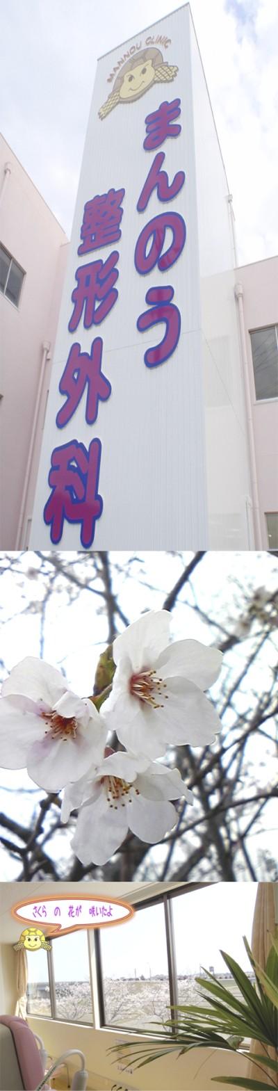 今年も桜が咲きました。